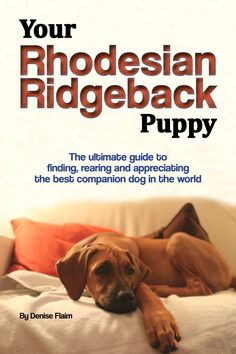 The ultimate guide to finding, rearing and appreciating the best companion dog in the world. Pet Insurance Reviews, Cheap Pet Insurance, Dog Insurance, Health Insurance, Rhodesian Ridgeback Puppies, Dog Breed Info, Most Beautiful Dogs, Companion Dog, Livres