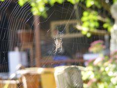 prachtig geweven web