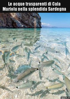 Le acque trasparenti di Cala Mariolu nella splendida.. | BESTI.it - immagini divertenti, foto, barzellette, video What A Wonderful World, Wonderful Places, Beautiful Places, Places Around The World, Around The Worlds, Places To Travel, Places To Visit, Cool Illusions, Paradise Travel