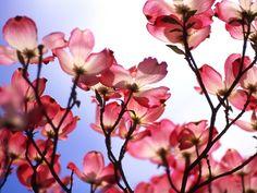 najlepše slike proleća - Google претрага