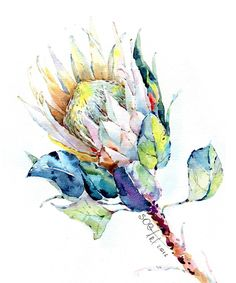 Protea by Lily Soga Protea Art, Protea Flower, Art And Illustration, Illustrations, Watercolour Painting, Watercolor Flowers, Buy Art Online, Art Tutorials, Art Inspo