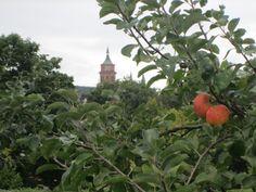 Weil der Stadt-  Apfelzeit