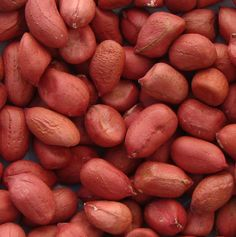 www.geewinexim.com/peanuts.php - Exporters, Suppliers & Wholesalers of Blanched & Salted Peanuts in India. Peanuts are used in Food Industry, Medical Industry & Oil Industry.