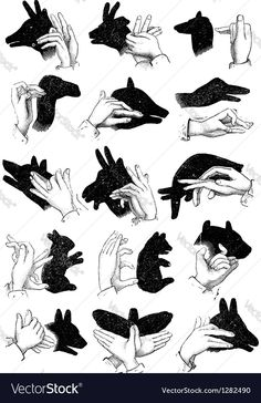 Hand shadow animals vector image on VectorStock Sign Language Words, Sign Language Alphabet, Shadow Images, Shadow Art, Amazing Life Hacks, Useful Life Hacks, Shadow Puppets With Hands, Hand Shadows, Fun Facts