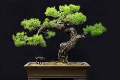 Thanh bonsai dating coach