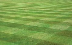 Mowing patterns in your lawn