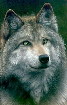 Волк- одиночка