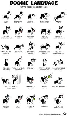Doggie Language by Lili Chin is a great cheat sheet for understanding a dog's body language! Learn more about what your dog's actions mean here: www.aspca.org/pet-care/virtual-pet-behaviorist/dog-behavior