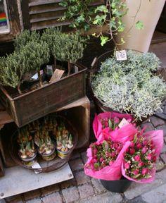 flower shop in Stockholm