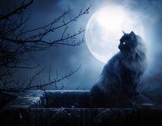 Los aman, los odian, los idolatran, les temen. Han sido dioses y demonios. Se les ha comparado con el viento ágil y con el fuego intenso. Su presencia ha impactado al hombre desde siempre. Son gatos: misterio, ternura, elegancia y belleza.