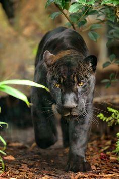 Parrainez un animal du Parc zoologique de Paris  http://www.pariscotejardin.fr/2013/11/parrainez-un-animal-du-parc-zoologique-de-paris/
