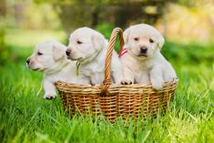 NATIONAL PUPPY DAY Observed each year on March is National Puppy Day. National Puppy Day will be celebrated on the Friday or Monday closest to March if that day falls on a weekend. National History Day, National Days, National Puppy Day, National Holidays, New Puppy Checklist, National Day Calendar, Puppy Supplies, Dog Clothes Patterns, Sewing Patterns