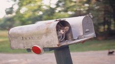 Have you signed up for my mailing list yet? Newsletters go out twice a week packed with sales, coupons and articles for you. Rural Mailbox, Cat Yawning, You've Got Mail, Cat Posters, Curious Cat, Cute Gif, Mail Art, Cool Cats, Framed Art