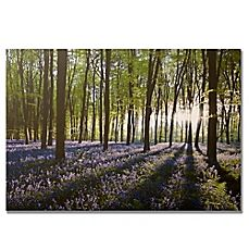 image of Bluebell Fields Landscape Canvas Wall Art