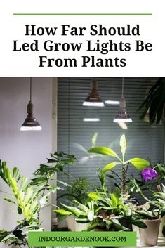 It's essential to know how far should LED grow lights be from plants or for how long to keep the light on the plants, in order to build the perfect conditions for their growth. There are so many new and interesting things coming up in this area! Indoor Plants, Indoor Gardening, Container Gardening, Gardening Tips, Indoor Greenhouse, Indoor Flowers, Urban Gardening, Indoor Grow Lights, Grow Lights For Plants