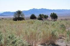 JD's Scenic Southwestern Travel Destination Blog: Northshore Road ~ Lake Mead National Recreation Area!