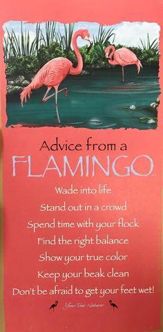 Advice from a Flamingo - I love it!