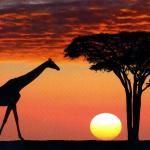 Blog For Our Trip to Mwanza, Serengeti Safari and Moshi - Tanzania Forum - Tripadvisor Tanzania, Kenya, Family Motto, Travel Reviews, Kilimanjaro, Creature Comforts, Travel Companies, Isle Of Man, Love At First Sight