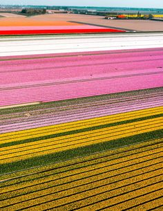 From April, Tulips in the Netherlands are most visited in Keukenhof, Lisse, or Amsterdam. Read about a location to see tulips for free without any tourists! Tulip Fields Netherlands, Tulip Season, Secret Location, Tulip Bulbs, Black Tulips, Happy Flowers, Walking Tour, Rainbow Colors, Places To See