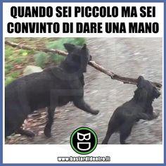 Un piccolo aiuto è meglio di niente! #bastardidentro #perfettamentebastardidentro #cani www.bastardidentro.it