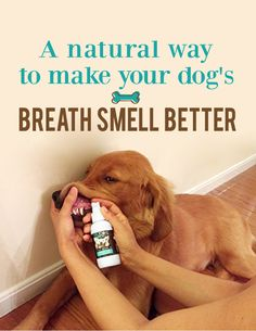 A Natural Way to Make Your Dog's Breath Smell Better http://trudog.com/lp/spray-me-3-p/?utm_source=%20Jeremy%20New%20Pinterest%20Spray%20Me&utm_medium=social&utm_campaign=Pinterest%20New%20Second%20Image