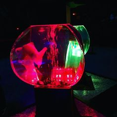 【510neee】さんのInstagramをピンしています。 《❁ *2015.11.3 . . □京都市中京区二条通堀川西入ル二条城町 . . #ファインダー越しの私の世界  #写真好きな人と繋がりたい  #写真撮ってる人と繋がりたい #京都 #二条城 #琳派400年記念祭  #世界文化遺産 #アートアクアリウム城 #京都金魚の舞 #2015年 #幻想的 #金魚 #アクアリウム #Japan #Japan_art_photography #lovers_nippon #team_jp #team_jp_西 #ptk_Japan #tokyocameraclub #whim_life #bestJapanpics #ig_Japan #Instagood #beautiful #lovephoto #wp_Japan #wu_Japan #japan_night_view #kyoto》