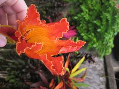 Tropical Blossom in Bali Click to see more http://www.ninadesigns.com/blog/category/bali/ #bali #travel