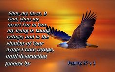 Soar Like An Eagle Quotes And Sayings Quotesgram Qu Quotes