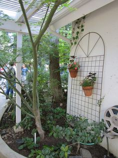 I saved the best for last!     Worker Bee and I both thought this was our favorite garden.     Garden #5     A Garden of My Dreams       Bl...