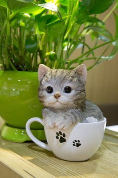Grey-Tabby-Cat-in-a-Cup-Figurine-Decoration-Gift-Resin5-75-in-New-Kitten-Teacup