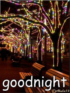 Xmas Lights on Trees Gif Christmas Scenes, Noel Christmas, Outdoor Christmas, Christmas Pictures, Winter Christmas, Christmas Lights, Vintage Christmas, Animiertes Gif, Animated Gif