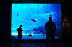 10 Largest, Biggest & Best Aquariums In the World Another World, Continents, Pet Birds, Conservation, Pet Dogs, Aquarium, Wildlife, Backyard, Urban