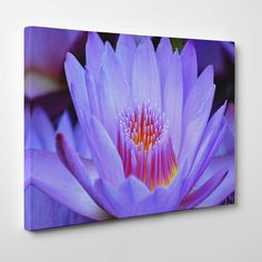 Canvasprints.io | Purple Lotus Flower Zen Style - #canvasprintsio - Low cost, high quality canvas prints made in London UK from just £13.99. You're sure to find inspiration in our collection. Ask about our photo to canvas option too, it's super simple. Canvas prints on wall / flower and floral canvas art