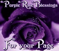 purple rose blessings for your page