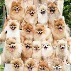Pet food sales division across the USA! #dogs #pets #Pomeranians Facebook.com/sodoggonefunny