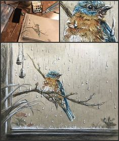 #bluebird from todays #sketchbookct meetup at #Panera Had to add the rain. Dreary but cozy day. Great meetup. #drawing #sketch #avianart #watercolor and @generalpencil #charcoalpencil