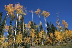 Telluride | Flickr - Photo Sharing! Vineyard, Explore, Mountains, Nature, Photos, Travel, Outdoor, Pictures, Outdoors