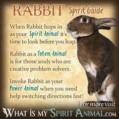 Rabbit Spirit Totem Power Animal Symbolism Meaning 1200x1200