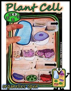 One of my favorite creations is these plant and animal cell foldables. (IMAGE BELOW) (IMAGE ABOVE) You can see that each of the foldables has flaps that open that allow students to id… Primary Science, Science Classroom, Teaching Science, Life Science, Science Lessons, Classroom Activities, Science Resources, Science Activities, Educational Activities