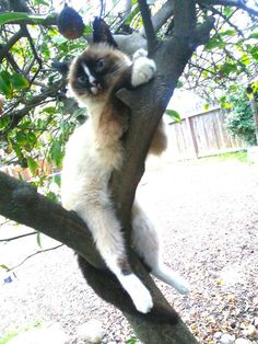 OP says:  Lily's back legs don't work great, so when I take her outside to play sometimes I put her in trees. She just sits and loves it!