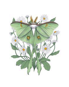 Metamorphosis - Luna Moth Art Print by Laurie Pigeon - Illustration & Design - X-Small Luna Moth Tattoo, Moth Tattoo Design, Lunar Moth, Moth Drawing, Cute Tattoos, Framed Art Prints, Art Inspo, Retro, Art Drawings