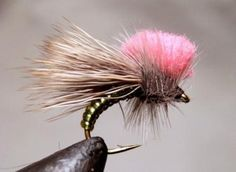 """Step-by-Step Photo Instructions on How to Tie """"Clown Shoe Caddis"""" Fly"""