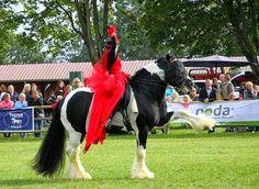 Showtime in Denmark Drum Horse Stallion Lord Korpus King Keen show rider Sielja Dantved