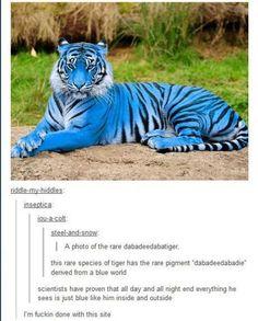 Hahahaha. I laughed way harder at this than I should have.