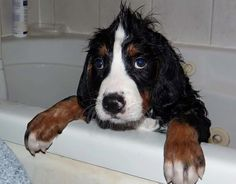 not so happy about having a bath