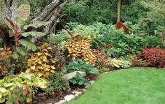 Tropical Plants - Hosta, coleus, zebra banana, Medinilla shrub, Angel's trumpet - National