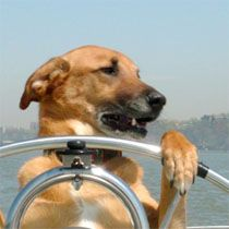 Dog Sailing in NYC