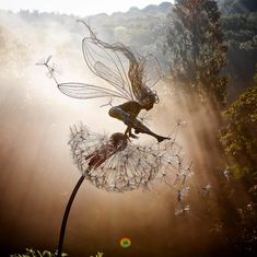 Happy Monday night fairy fix everyone. Hope you all have a great week. Three Best Friends, Friends Set, Robin Wight, Garden Gifts, Statue, Natural World, Daffodils, Faeries, Amazing Gardens