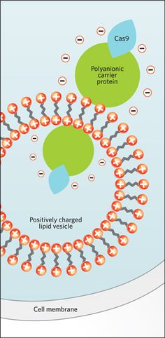 A good read on the CRISPR/Cas9 system. Red Hot | The Scientist Magazine®