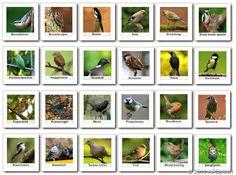 1000 images about onderwijs natuur biologie on pinterest